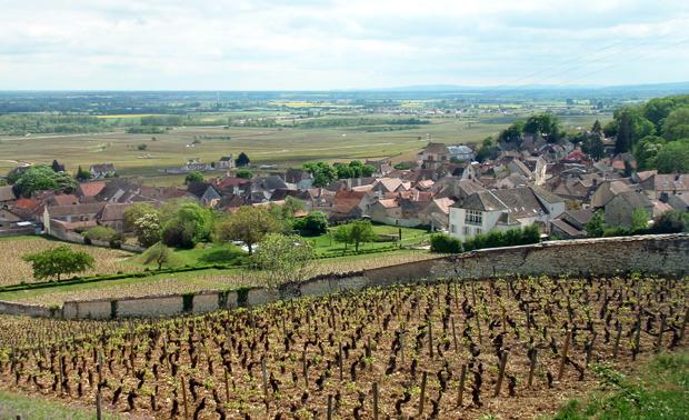 Wine tour to Mersault in Burgundy