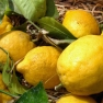 Lemons in Sorrento, Bay of Naples, Italy