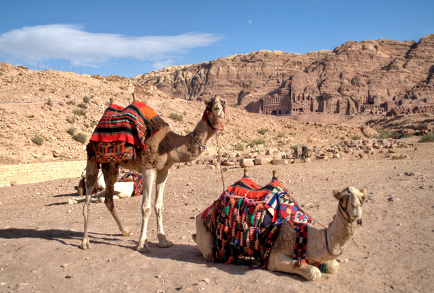 Camels at Petra, Jordan