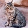 Cats at Petra, Jordan