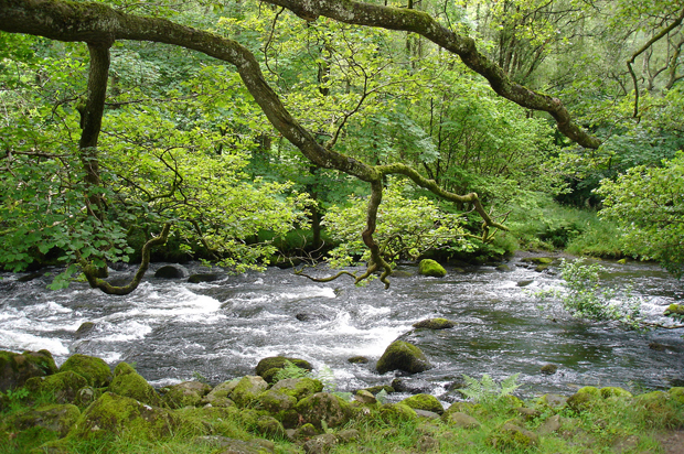 Stream in the Lake District, Cumbia, England
