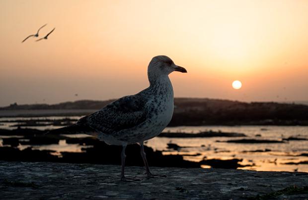 Sunset over Essaouira on the coast of Morocco