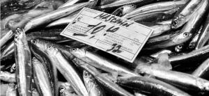 Fish market Catania, Sicily