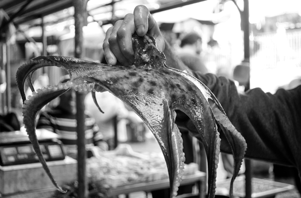 Octopus in Catania fish market, Sicily, Italy